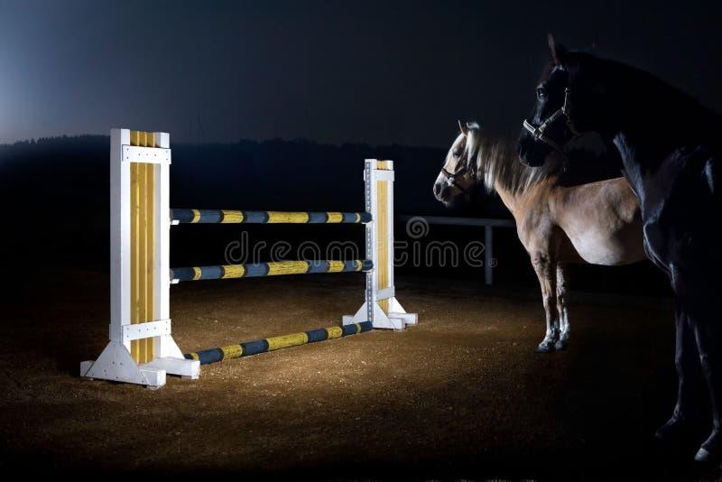 Warmblood hästar framme av en häck royaltyfria bilder