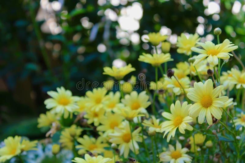Warme Geel stock foto