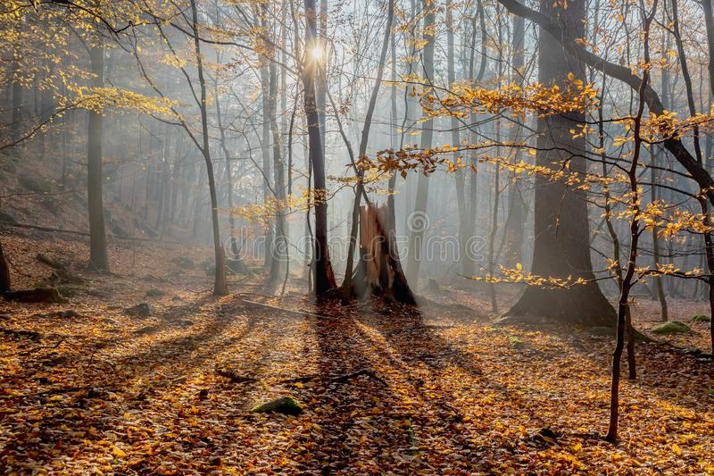 Warme Herbstlandschaft in einem Wald, wenn die Sonne schöne Strahlen des Lichtes durch den Nebel und die Bäume wirft stockfotos