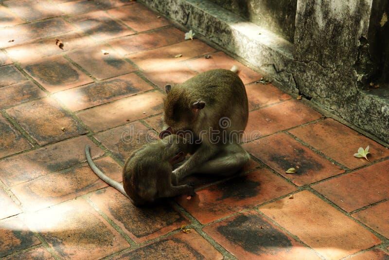 Warme Liebe von Montag im Tier lizenzfreies stockfoto