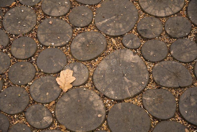Warme Schatten des hölzernen braunen Hintergrundes gemacht von den Rundholzstücken mit Bronzefarbeichenblatt auf Hölzerne Quersch lizenzfreie stockfotos