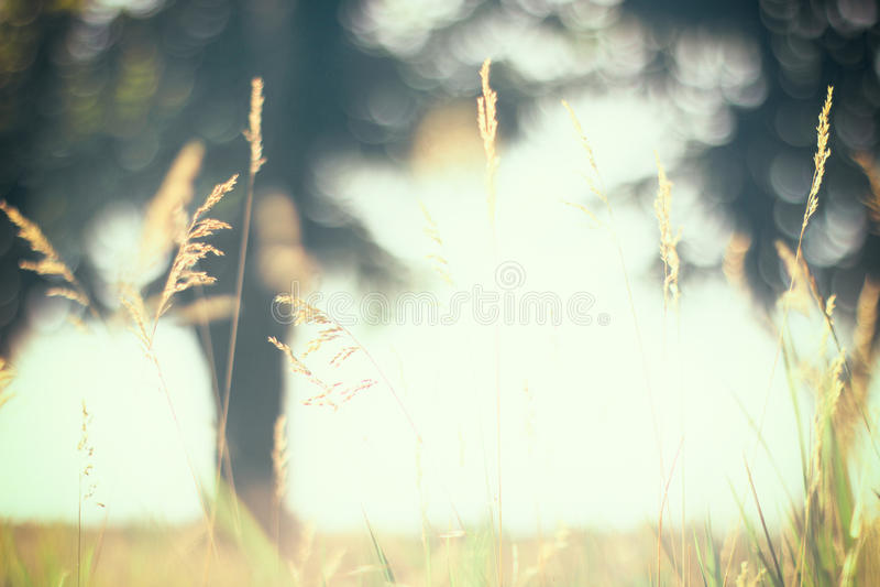 Warme uitstekende onscherpe foto van de zomerweide bij zonsondergang royalty-vrije stock afbeelding