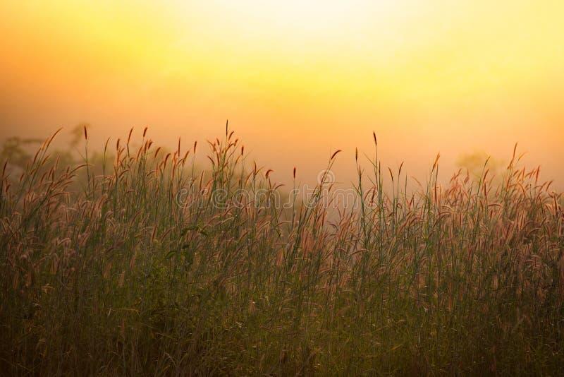 Warme zonlichtochtend stock afbeeldingen