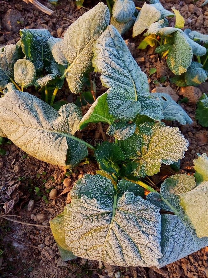 Warmer Wintermorgenfrost stockbilder