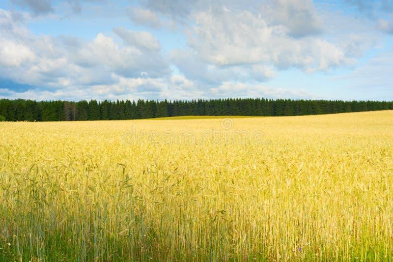 Warmgewassenoogst Estland royalty-vrije stock afbeelding