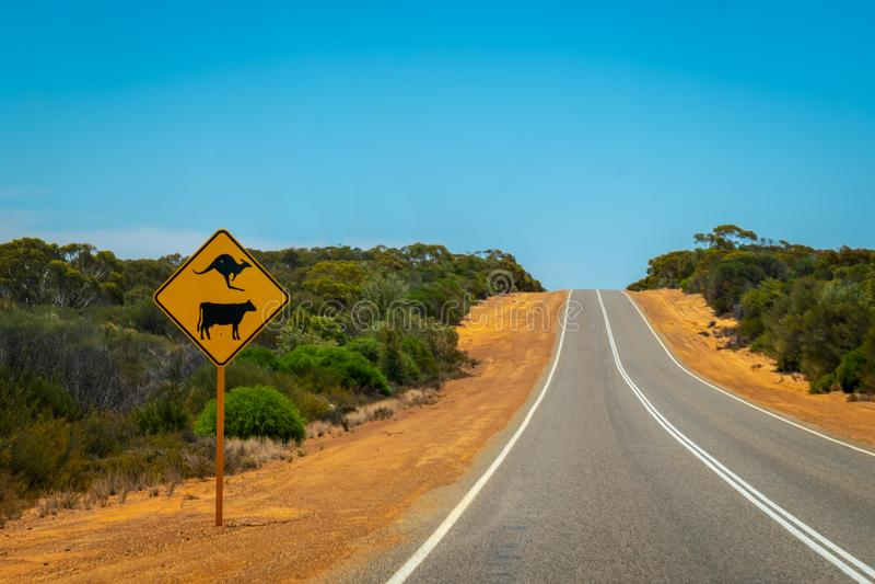 Warnendes K?nguru- und Kuhstra?enschild auf australischer Buschstra?e nahe Billa Bong Roadhouse lizenzfreies stockbild