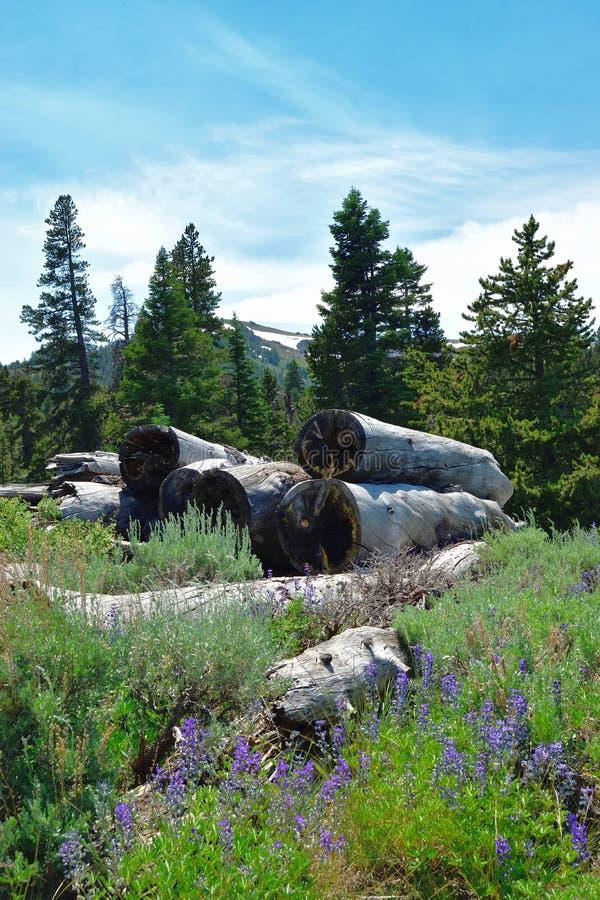 Free Warner Mountains, Modoc County, California Royalty Free Stock Image - 96154886