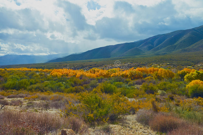 Warner Springs. Fall color in the valley at Warner Springs, California royalty free stock image