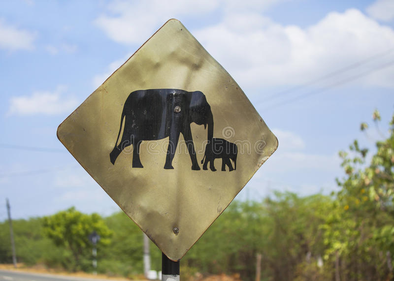 Warning sign for elephants on the road royalty free stock image