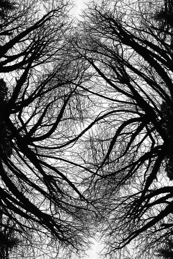 Download Warped Limbs Art stock illustration. Illustration of surreal - 1760243