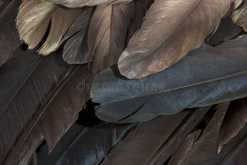 Warstwa ptaków piórka Pokazuje Różnorodnych kolory fotografia stock