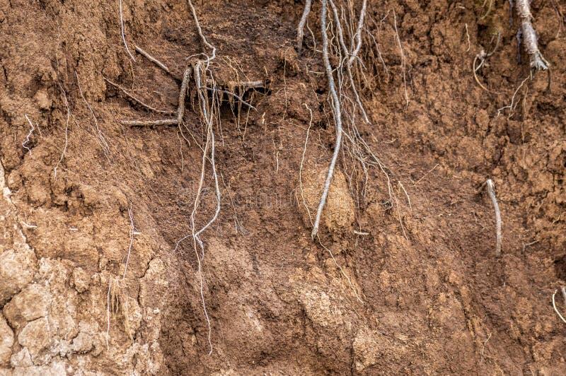 Warstwy ziemia moczą glebowych korzenie w glebowych glebowego profilu ziemi strefach zdjęcie stock