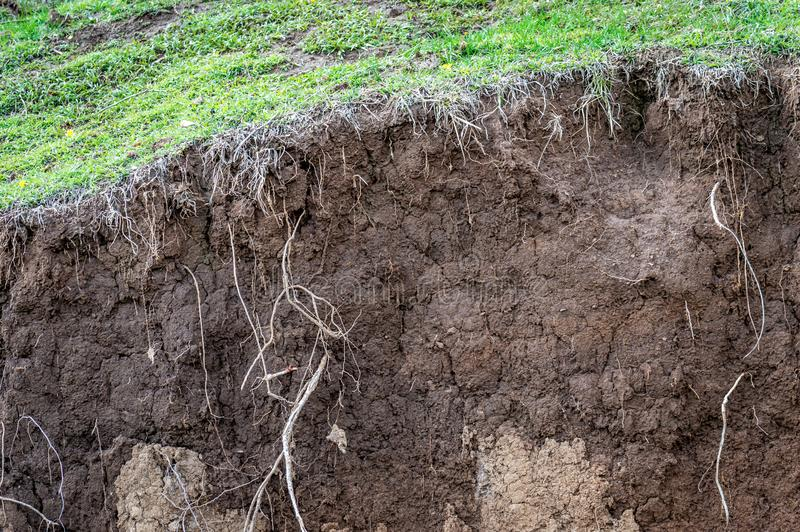 Warstwy ziemia moczą glebowych korzenie w glebowych glebowego profilu ziemi strefach gr fotografia stock