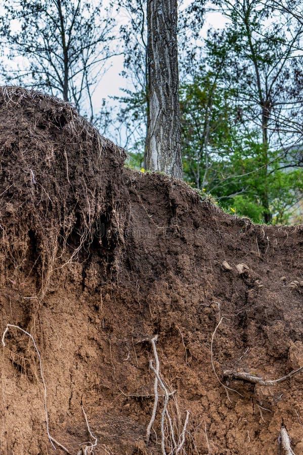 Warstwy ziemia moczą glebowych korzenie w glebowych glebowego profilu ziemi strefach tr obraz stock