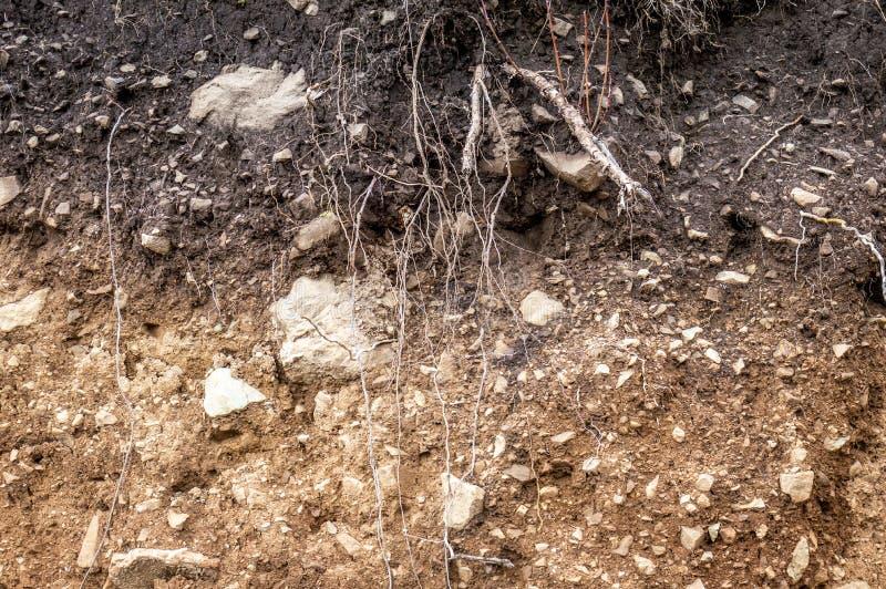 Warstwy ziemia moczą glebowych korzenie w glebowym glebowego profilu ziemi stref ro zdjęcia royalty free