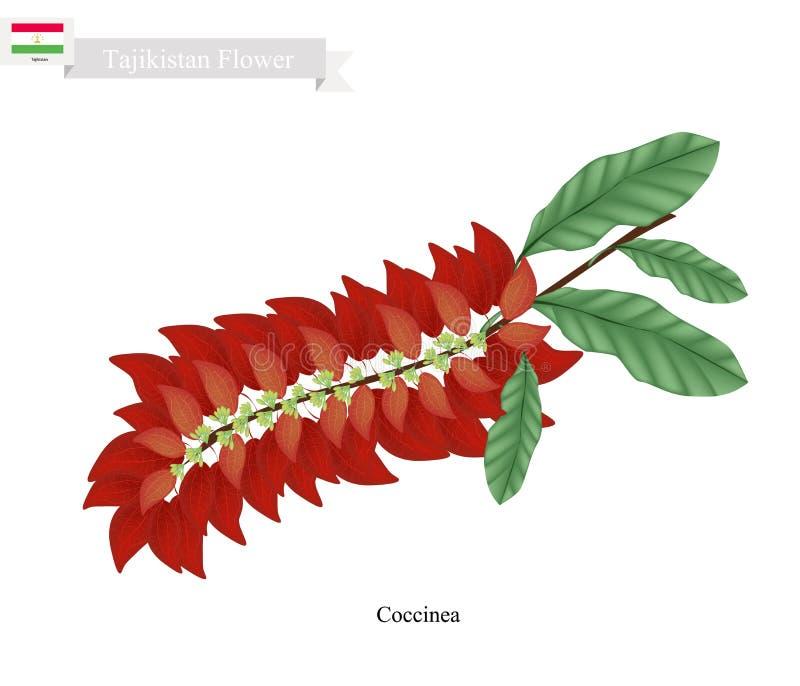 Warszewiczia Coccinea, die populäre Blume von Tadschikistan stock abbildung