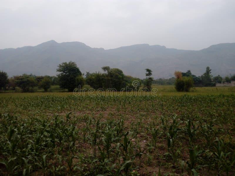 Wartair Distt Malakand Пакистан деревни стоковая фотография rf