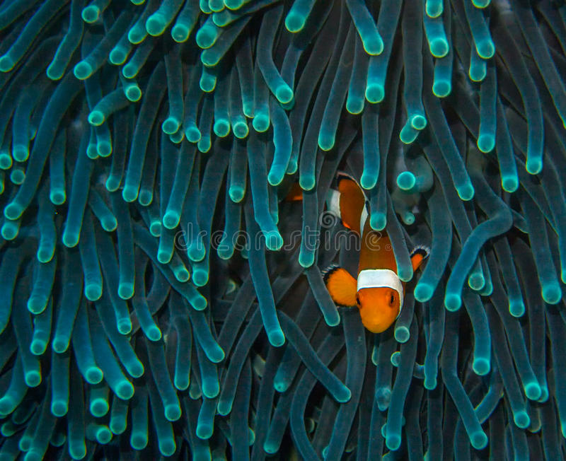 Warteclown Fish stockbilder