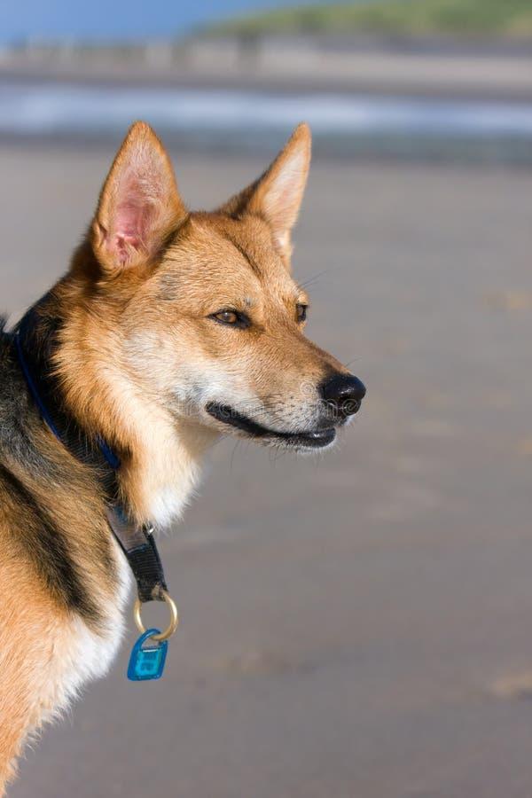 Wartehund stockbild