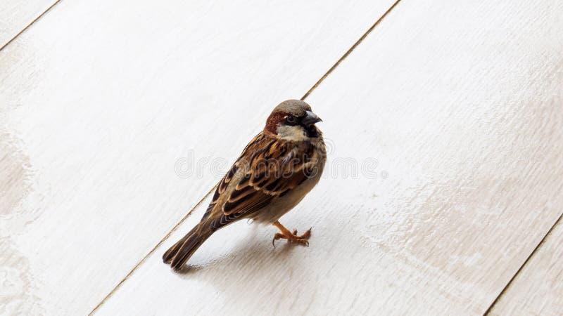 Wartenahrung des netten Vogels lizenzfreies stockbild