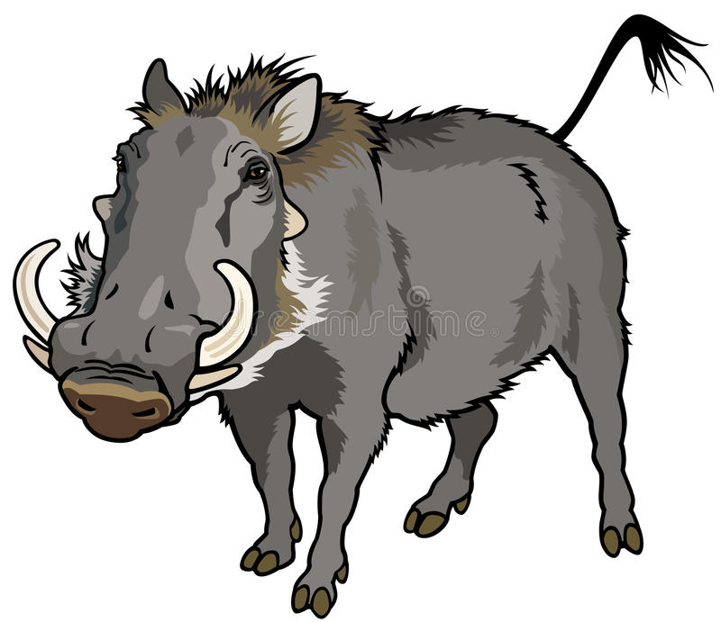 Warthog stock illustration