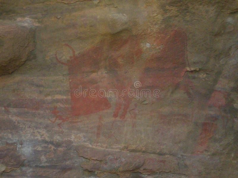 Warthog rysujący na ścianie obraz royalty free