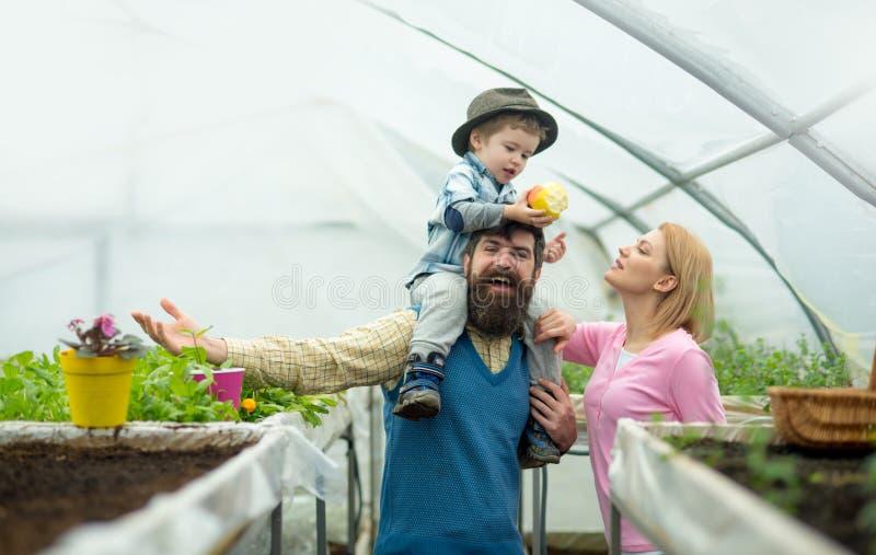 Wartości rodzinne Szczęśliwe wartości rodzinne Wartości rodzinnej pojęcie wartości rodzinne i zaufań ludzie w szklarni obrazy stock