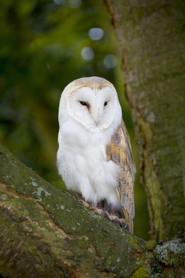 warwickshire för park för ladugårdengland kingsbury midlands owl vatten royaltyfri bild