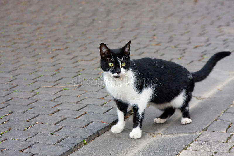 Wary alley cat. Black-an-white alley cat staring wary at the street royalty free stock image