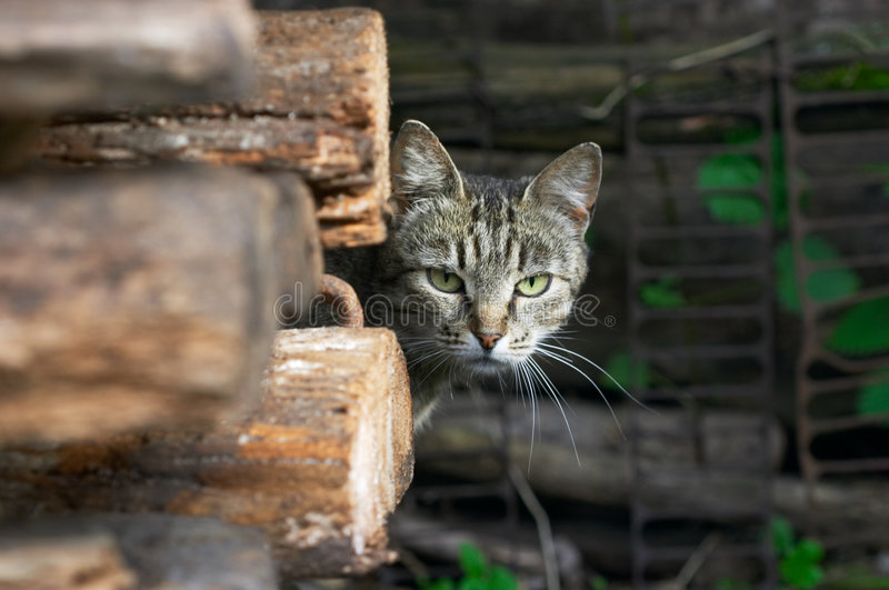 Wary cat stock images