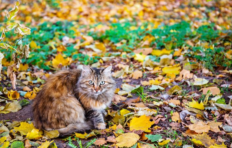 Wary cat in autumn. Wary cat sitting among the fallen leaves royalty free stock photography