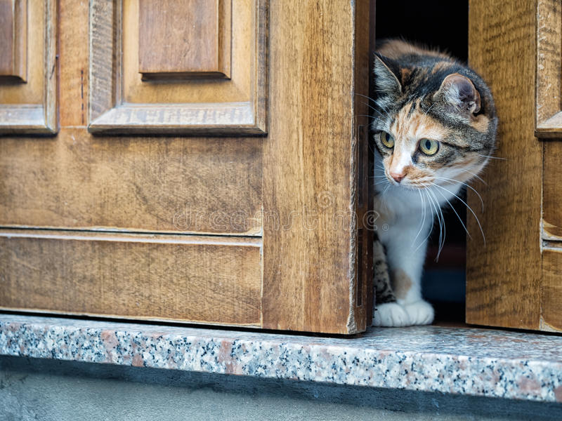 Wary cat at door. Note candid shot, narrow depth of field, focus. Cute pet cat. Note: this was a candid shot to catch the moment, so narrow depth of field but royalty free stock photo