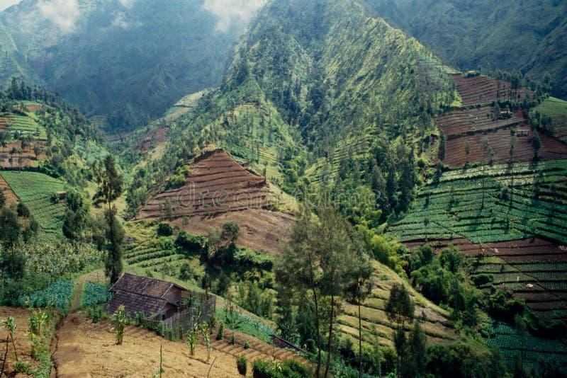 Warzyw pola na skłonach Tengger pasmo górskie, Jawa, Indonezja obrazy royalty free
