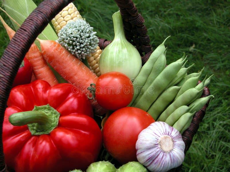 warzywa zdjęcia royalty free