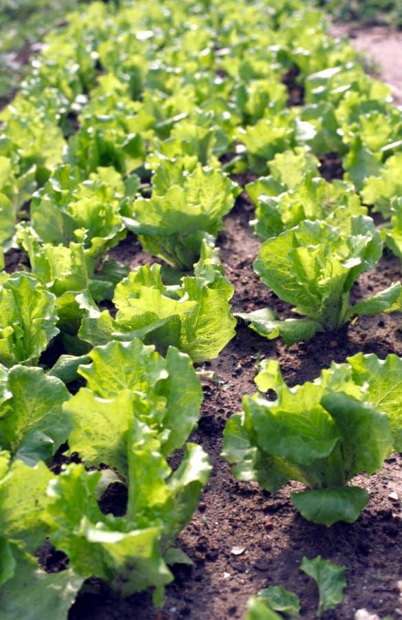 Download Warzywa obraz stock. Obraz złożonej z kwiat, fabuła, kopiasty - 3413133
