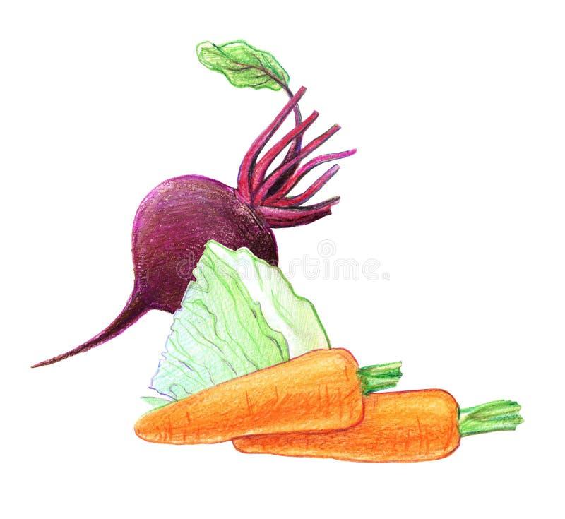 Warzywa i korzeniowi warzywa Buraki, kapusta, marchewki Ca?o?? w ci?ciu i Graficzny rysunek z barwionymi o??wkami Odizolowywaj?cy ilustracji