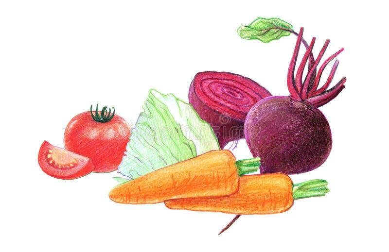 Warzywa i korzeniowi warzywa Buraki, kapusta, marchewki i pomidory, Ca?o?? w ci?ciu i Graficzny rysunek z barwionymi o??wkami ilustracji