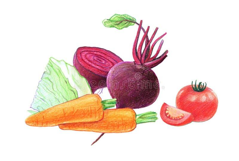 Warzywa i korzeniowi warzywa Buraki, kapusta, marchewki i pomidory, Ca?o?? w ci?ciu i Graficzny rysunek z barwionymi o??wkami royalty ilustracja