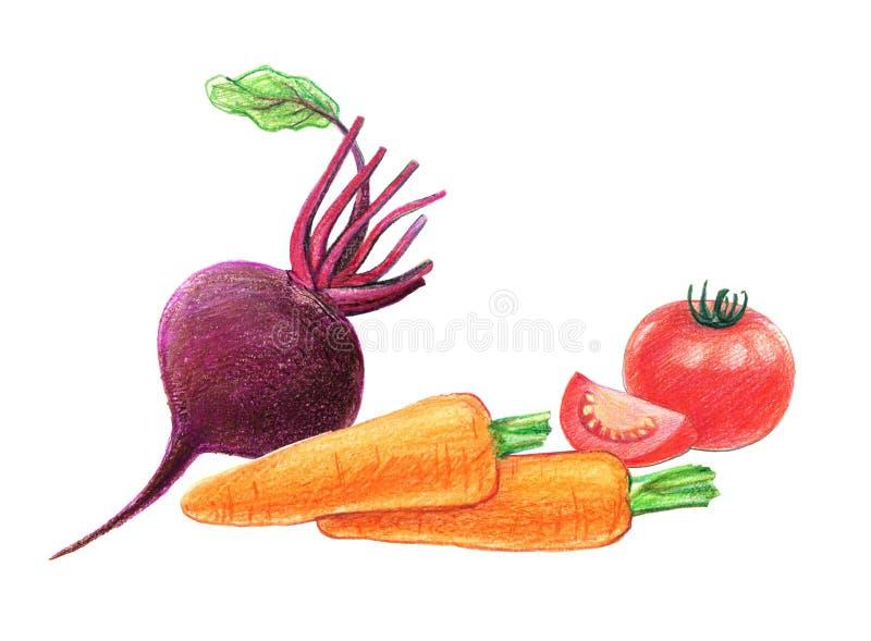 Warzywa i korzeniowi warzywa Buraki, marchewki i pomidory, Ca?o?? w ci?ciu i Graficzny rysunek z barwionymi o??wkami odosobniony ilustracja wektor