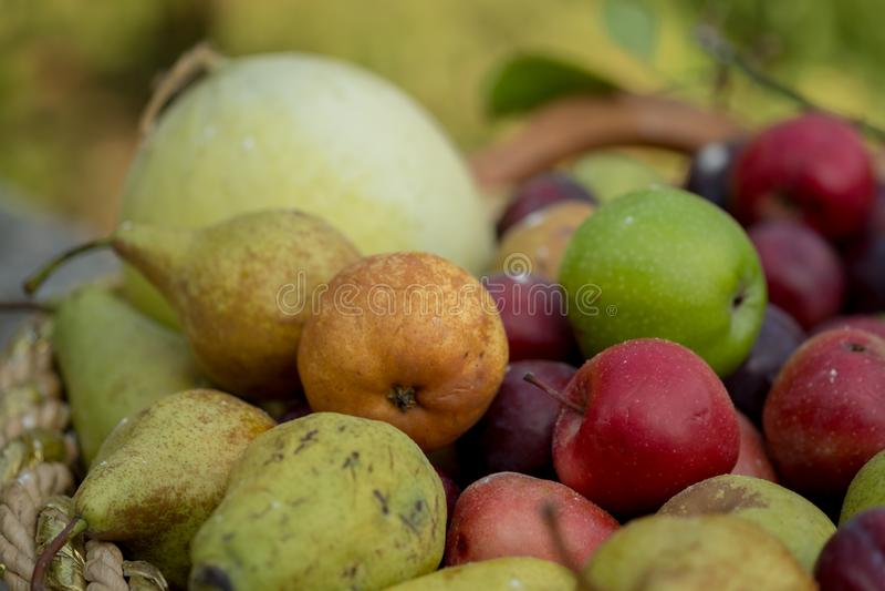 Warzywa i owoc w gospodarstwie rolnym podczas wschodu słońca obraz royalty free