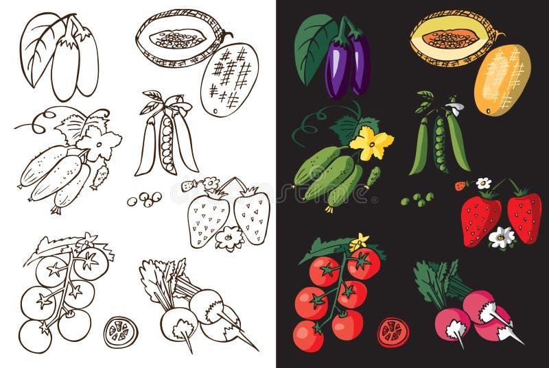 Warzywa, jagoda i melon, ilustracja wektor