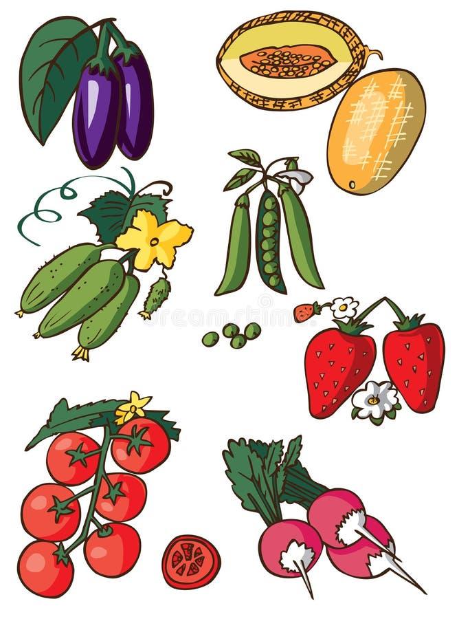 Warzywa, jagoda i melon na białym tle, ilustracja wektor