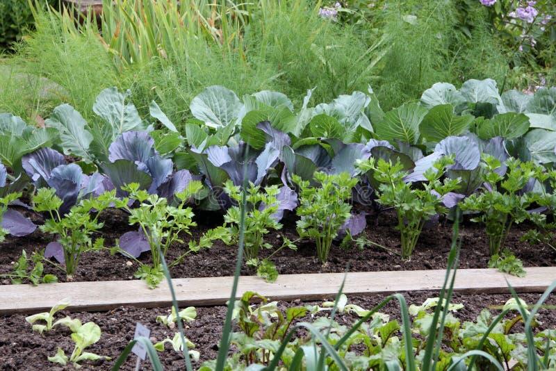 Warzywa ogródu łóżko zdjęcia stock