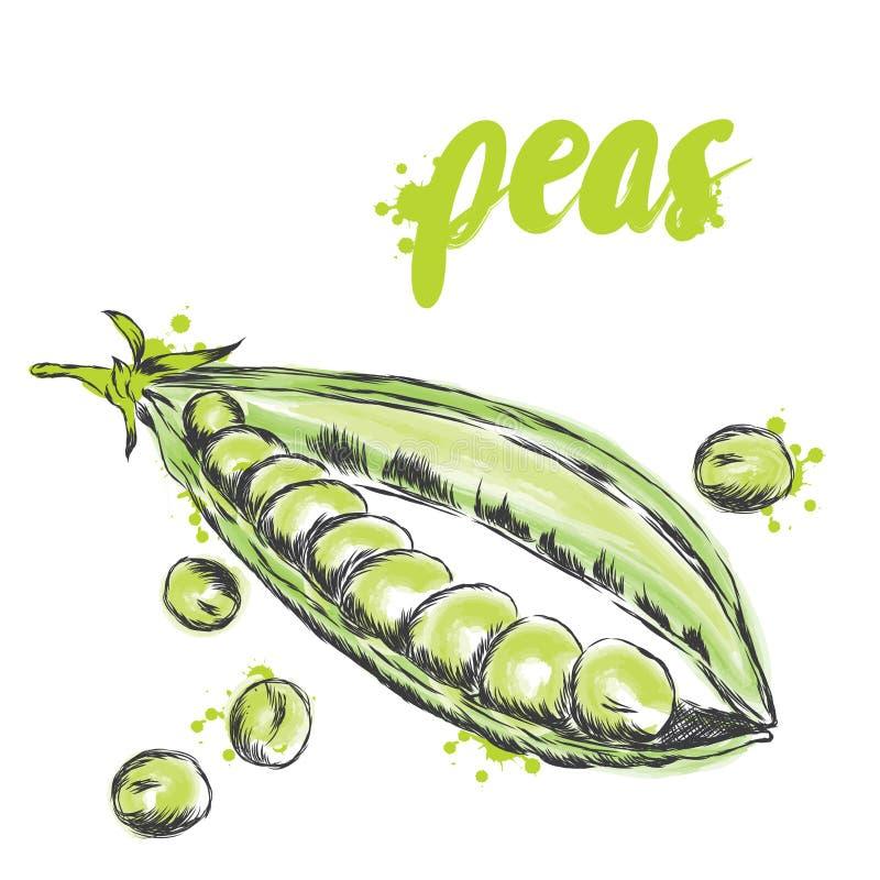 Warzywa rysujący ręką eps kartoteka zawierać wektorowi warzywa Jedzenie Akcyjny posiłek Grochy tła zieleni odosobniony grochowy b ilustracji