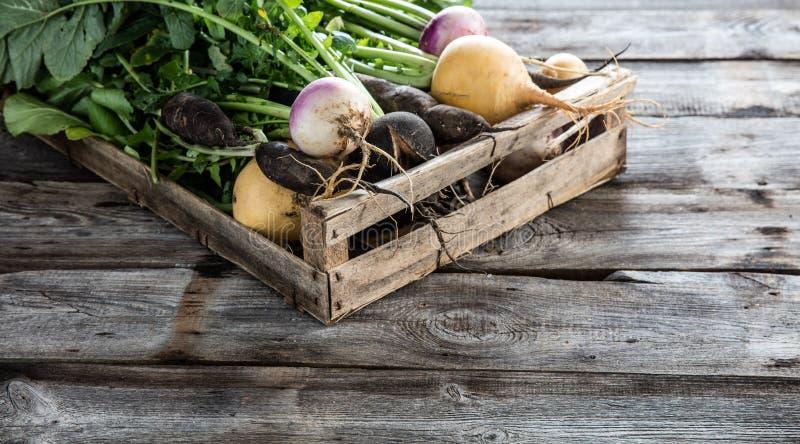 Warzywa z korzeniami w drewnianej skrzynce dla prawdziwego podtrzymywalnego rolnictwa zdjęcia stock