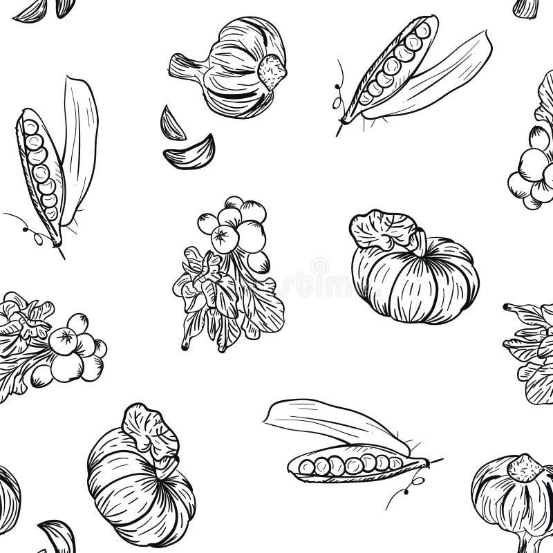Warzywo wzoru ręki rysunek w doodle stylu na białym tle Doodle warzywa rysunkowy wzór Dojrzała jesieni uprawa ilustracja wektor