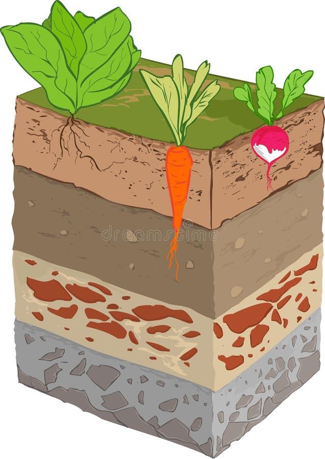 Download Warzywo ziemi warstwa ilustracja wektor. Ilustracja złożonej z linia - 53792748