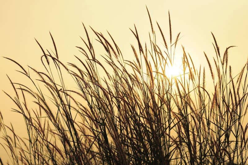 Was über Sonnenuntergang? lizenzfreies stockbild