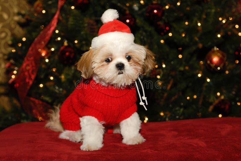 Was bedeuten Sie, kein Weihnachtsmann? lizenzfreie stockfotografie
