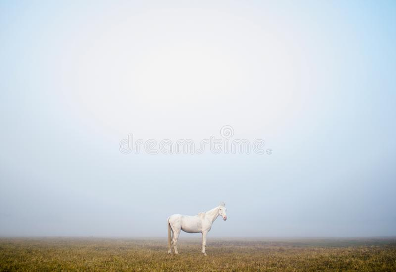 White Horse standing alone in the misty fog in a beautiful morning in Kolkata, India royalty free stock images